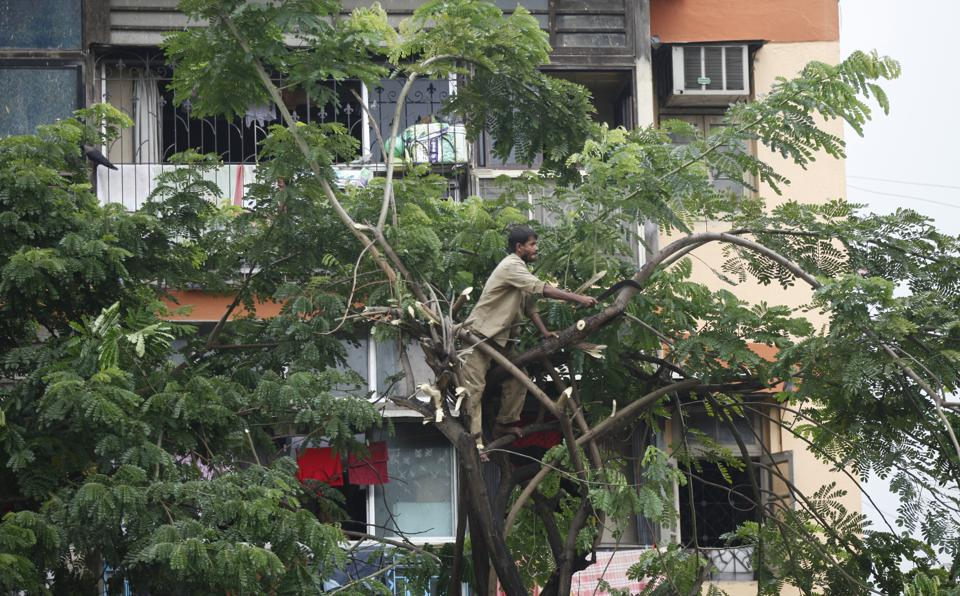 The BMC planned to cut 130 dead or dangerous trees ahead of this monsoon.