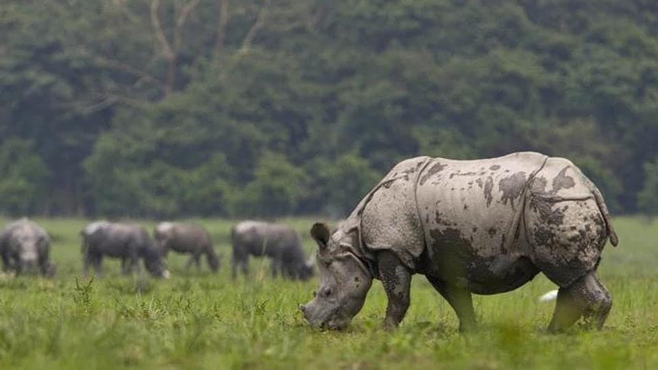 The number of rhinos in Jalpapara and Gorumara landscapes are 237 and 52 respectively.