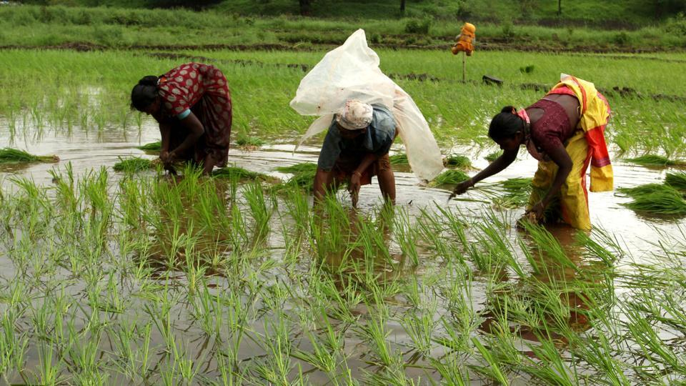 monsoon in india,critical for the economy,summer-sown crops