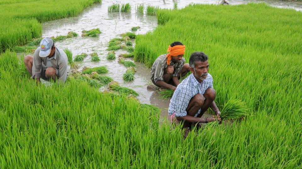 The government has also announced to widen the scope of insurance cover to farmers dying in accidents.