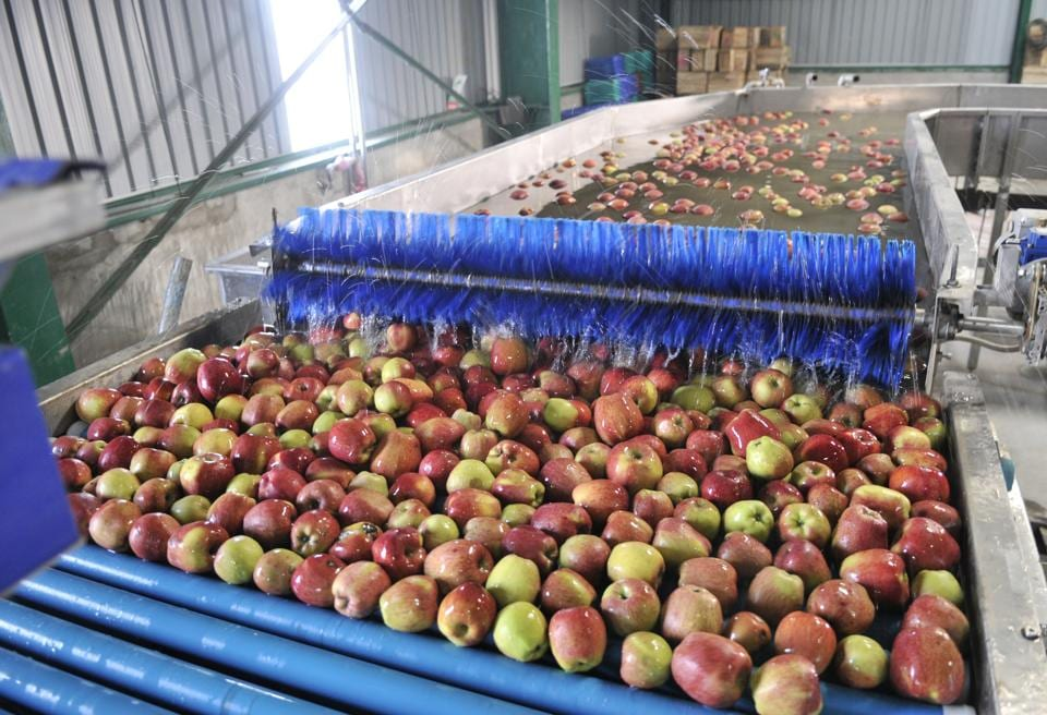 India imported a record 7.8 million 40-pound boxes of the fine quality 2017 Washington state apple crop as of mid-June last year, Yakima Herald reported. Image used for representational purpose only.