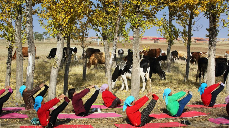 Yoga to cure loneliness,agricultural products,yoga practitioners