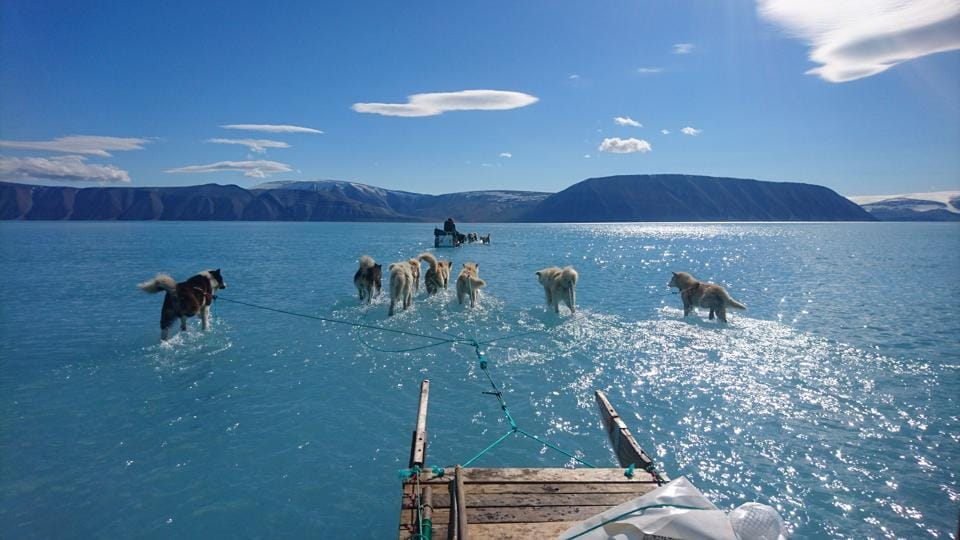 A June 13, 2019 hand out image photographed by Steffen Olsen of the Centre for Ocean and Ice at the Danish Meteoroligical Institute shows sled dogs wading through standing water on the sea ice during an expedition in North Western Greenland