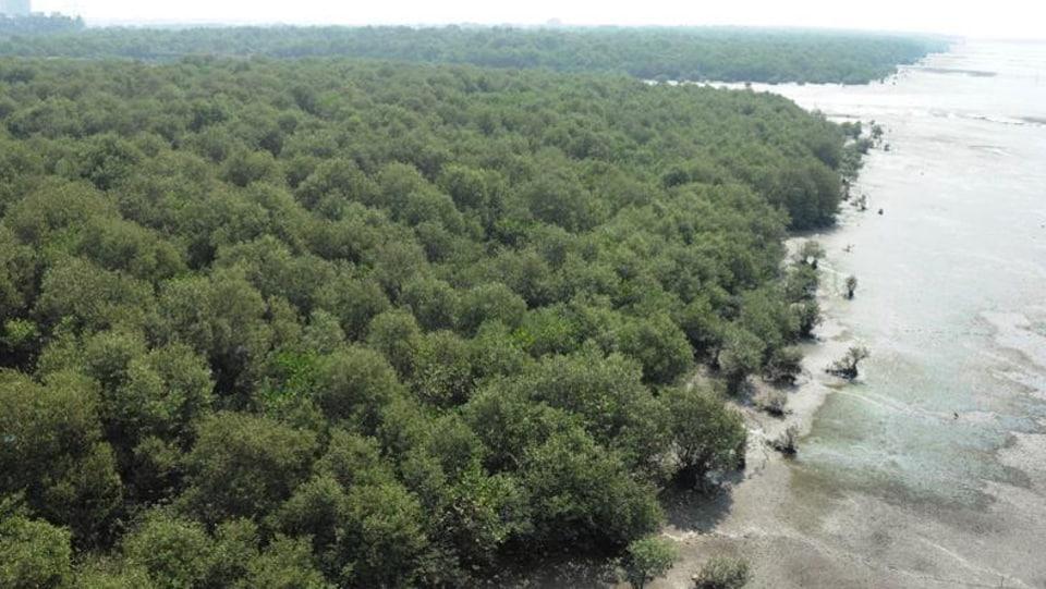Maharashtra,mangroves,bullet train