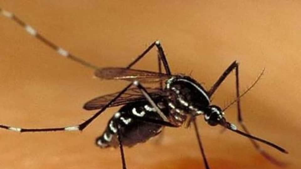 The number of dengue cases has reached 22, and there were seven cases of Chikungunya, the report stated.