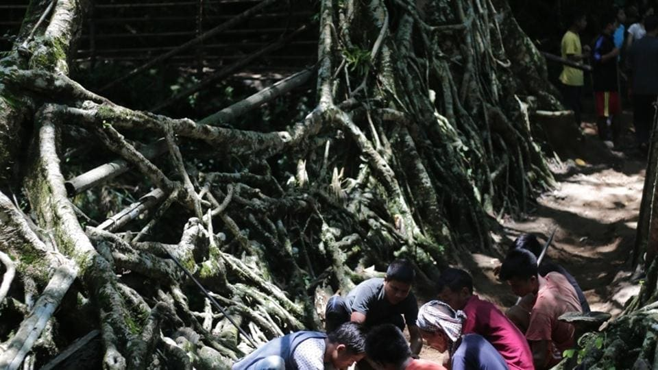 Meghalaya villagers come together to save 200-yr-old living root bridge