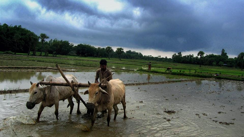 A farmer ploughs his field to prepare for cultivation as monsoon clouds gather in the sky at Malda, in West Bengal. Skymet has recommended that sowing of crops should be taken up in central, south and east India before there is a dry phase again.