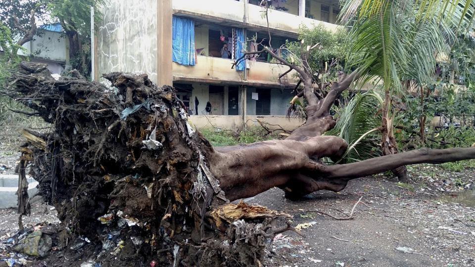 A tree fell inside Kamgar Hospital's premises at Wagle Estate and damaged four bikes.