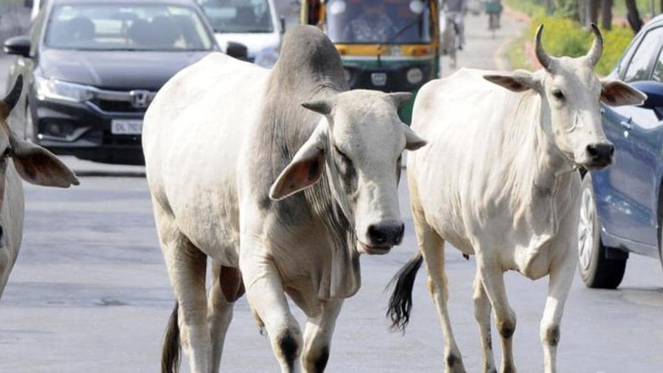 Two persons were allegedly assaulted by a mob in Haryana's Gurgaon district on the suspicion of smuggling cattle.