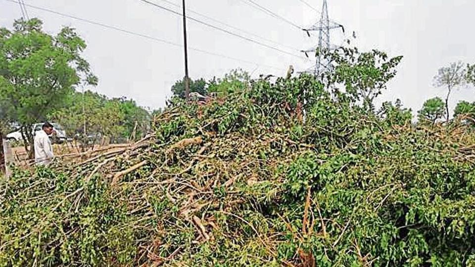 To pave way for a petrol pump and make the main road visible, a government-controlled oil and gas firm allegedly uprooted at least 140 trees at a green belt in Greater Noida.