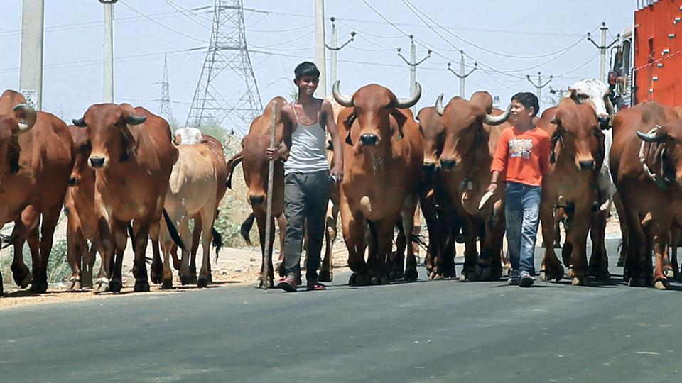 """The SC had directed Parliament to enact stern laws so as to provide """"preventive, remedial and punitive measures"""" to deal with cow vigilantism and mob lynching. (Photo: Himanshu Vyas/HT)"""