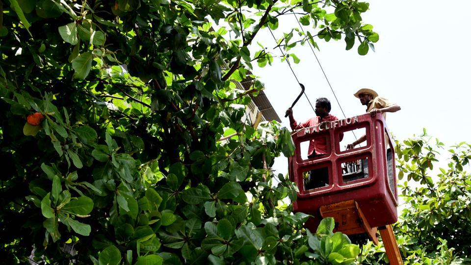 Contractors hired by the BMC will look after 29.75 lakh trees under the civic body's jurisdiction till March 2021.