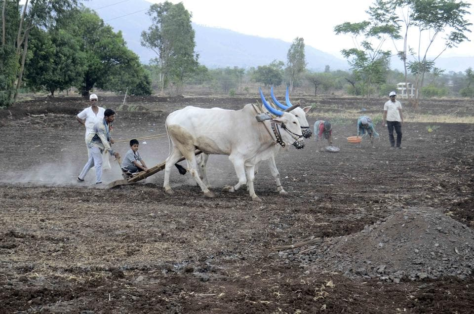 According to the recent data published by the Census of India, 71% Dalits are landless labourers who work on  land they do not own.