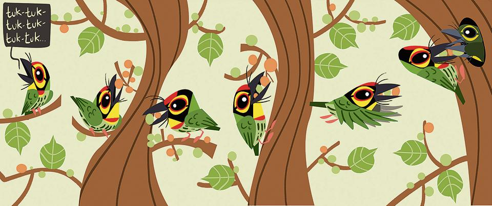 Illustration of the coppersmith barbet in Bird Business.