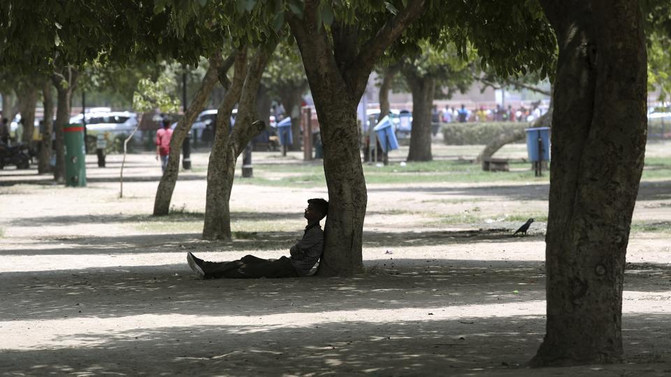 A city-based NGO on Sunday launched the first 'tree ambulance'.(AP Photo)