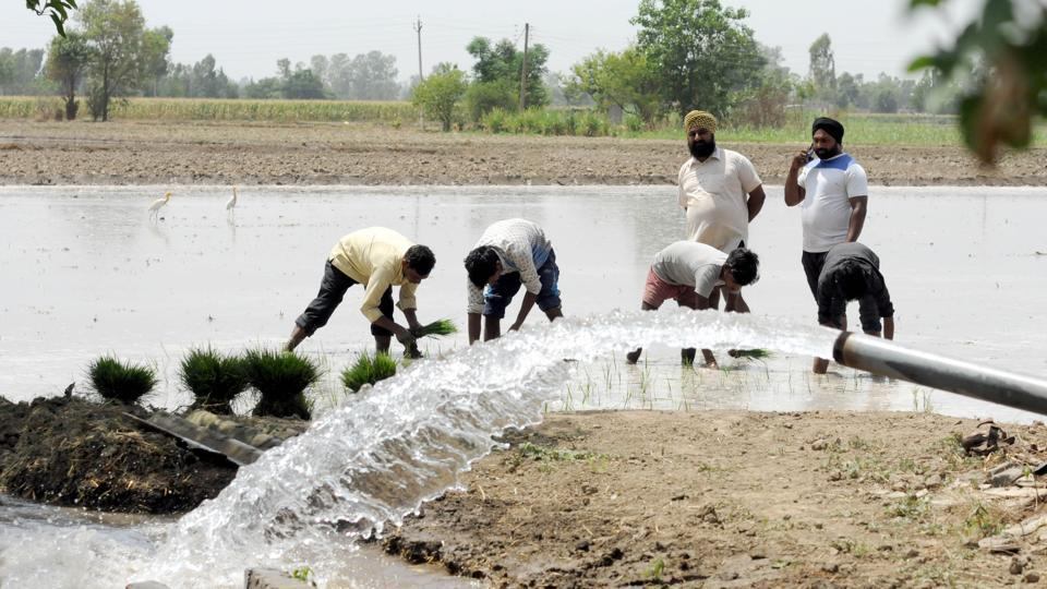 Punjab farmers' over-dependence on water-guzzler paddy is one of the major reasons of depleting groundwater level.
