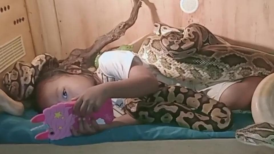 The pythons can be seen slithering all over the girl.