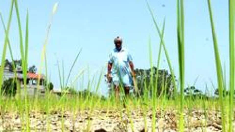 Although it is raining in several parts of Maharashtra, including the Mumbai-Pune belt, drought-hit Marathwada (central Maharashtra) hasn't received much rain, even as the first week of July is about to end. (Representative photo)