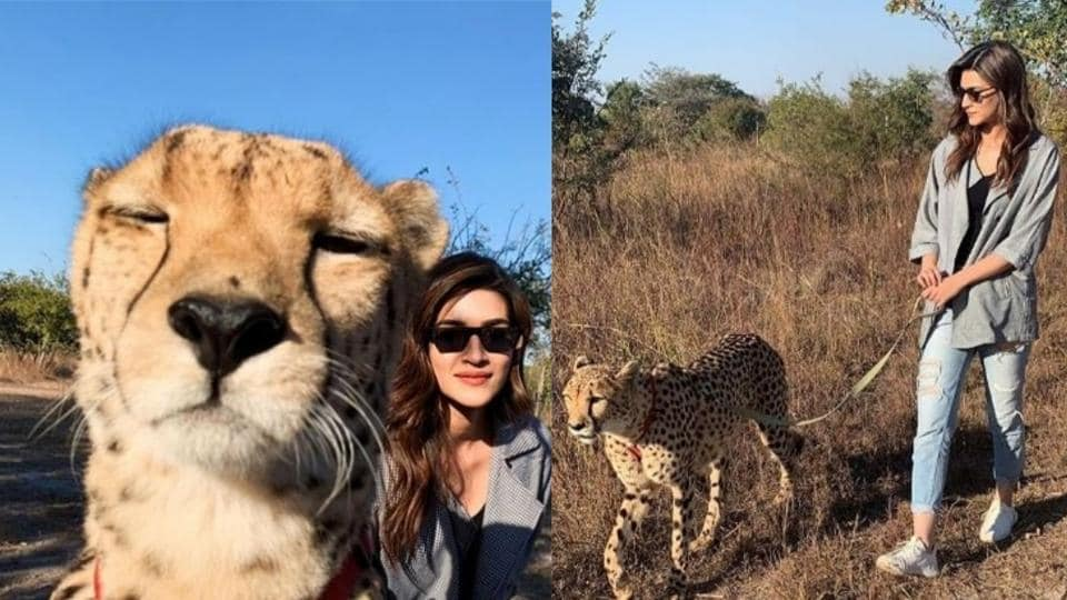 Kriti Sanon,Kriti Sanon with cheetahs,Kriti Sanon Zambia holiday