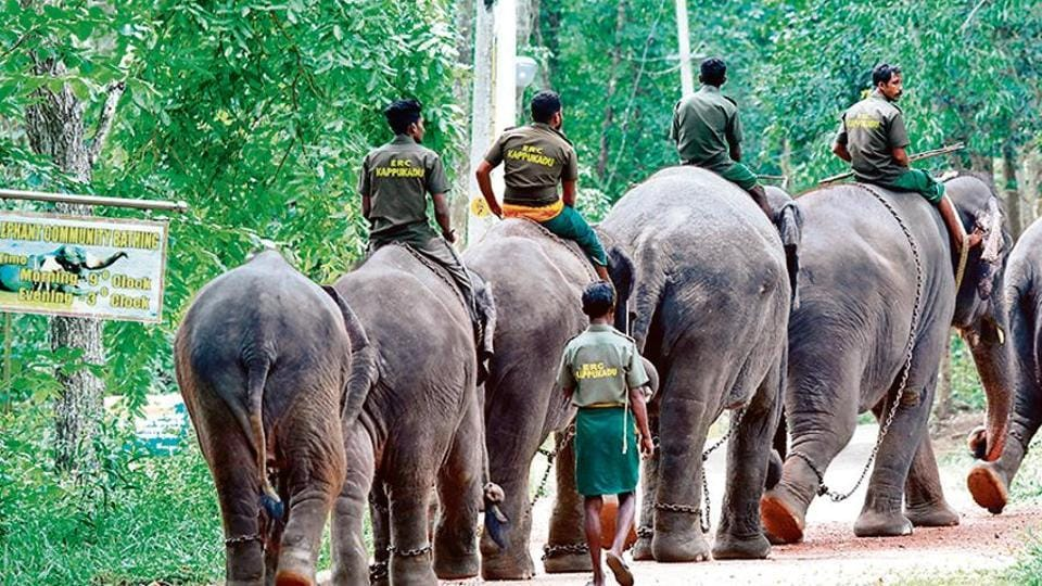While the centre has only 15 elephants so far, officials expect the numbers will go up once work on the infrastructure is complete.