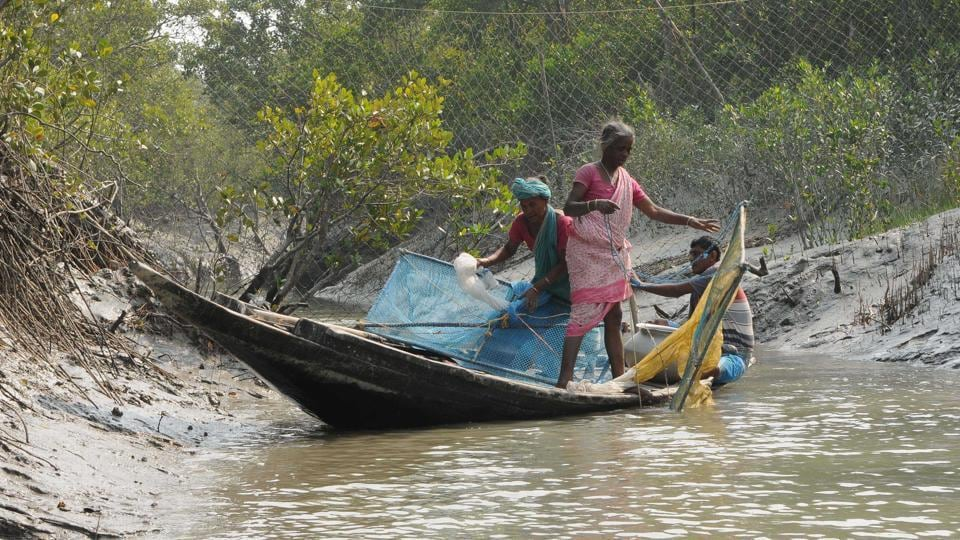 Fifty-year-old Banalata, who is a resident of Gosaba area, about 87 km to the south of Kolkata, was on a boat when a tiger suddenly attacked the boat.