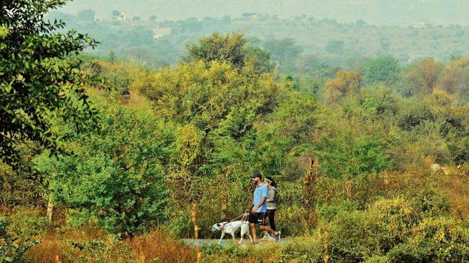 The sighting of endemic Indian birds in the park show that bioremediation  has brought back a large number of native species.