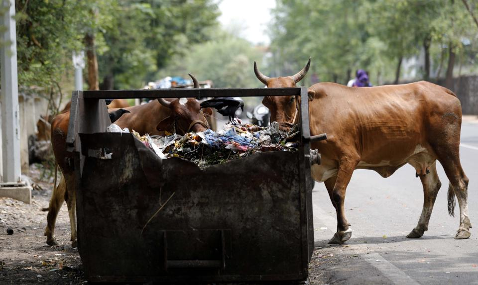 Pune,Cattle shed owners,register livestock