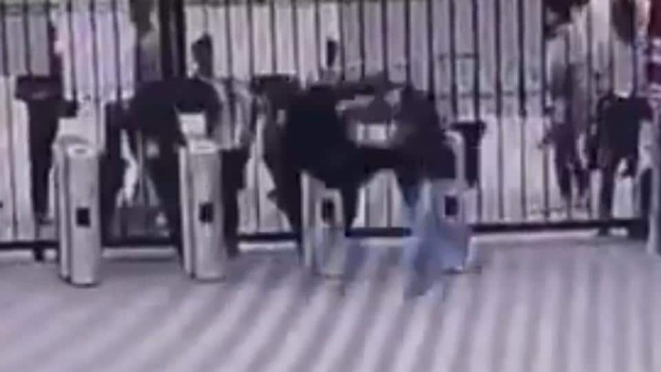 The video, recorded on a security camera, shows the chimp running towards the main gate of the facility