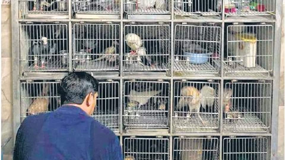 The Charity Bird Hospital in Gurugram's Jacobpura,  set up by the city's Jain community, will turn a decade old in September.