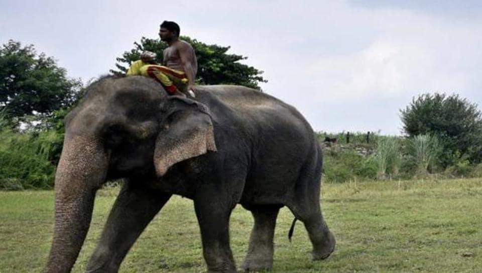 Lakshmi was seen near Yamuna on July 6.