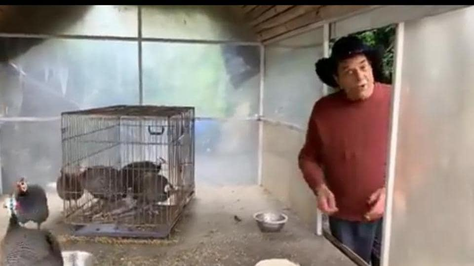 Dharmendra welcomes guinea fowls on his farm as his dogs get jealous, watch video