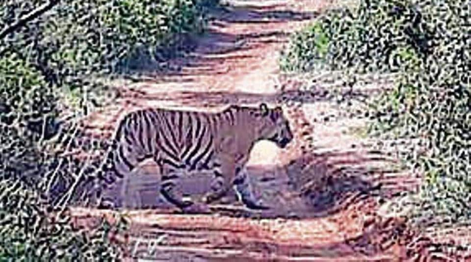 """A senior forest department official said on condition of anonymity, """"Relocation or developing a new habitat is part of an action plan for the next 10 years."""