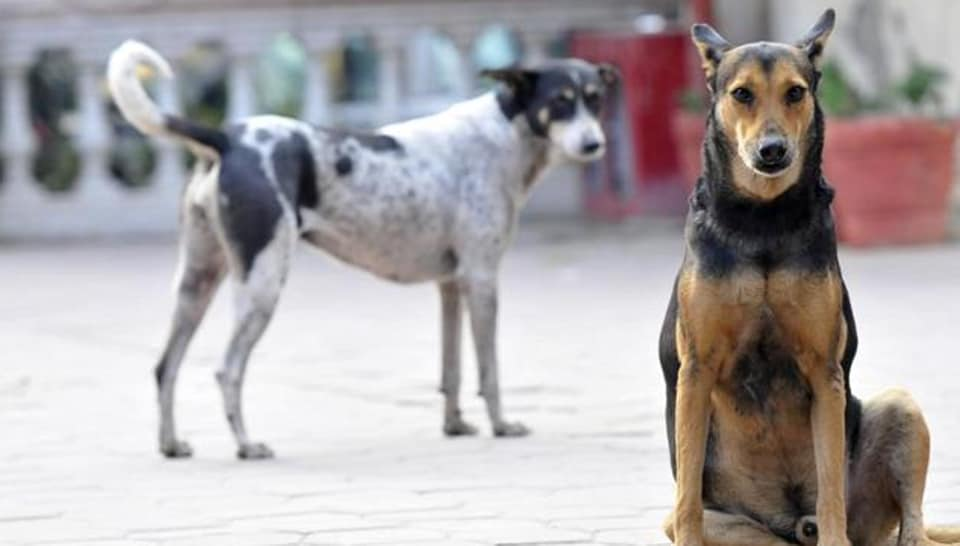 While civic agencies admitted to the problem, they claimed helplessness in addressing the problem, especially related to dogs and monkeys.