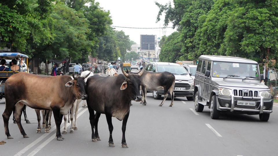The residents' welfare association (RWA) of Sector 23-A on Friday wrote a letter to the Municipal Corporation of Gurugram(MCG) seeking its intervention to check the increasing menace of stray animals in the area after a stray cow allegedly attacked an elderly gentleman.