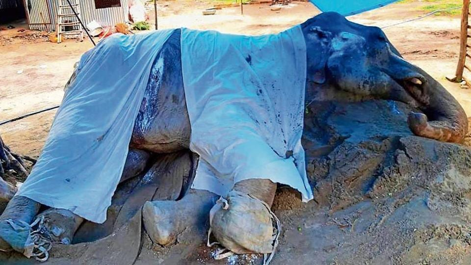 As Lakshmi's condition was not improving, a panel in June had discussed euthanasia or mercy killing. But the option was ruled out.