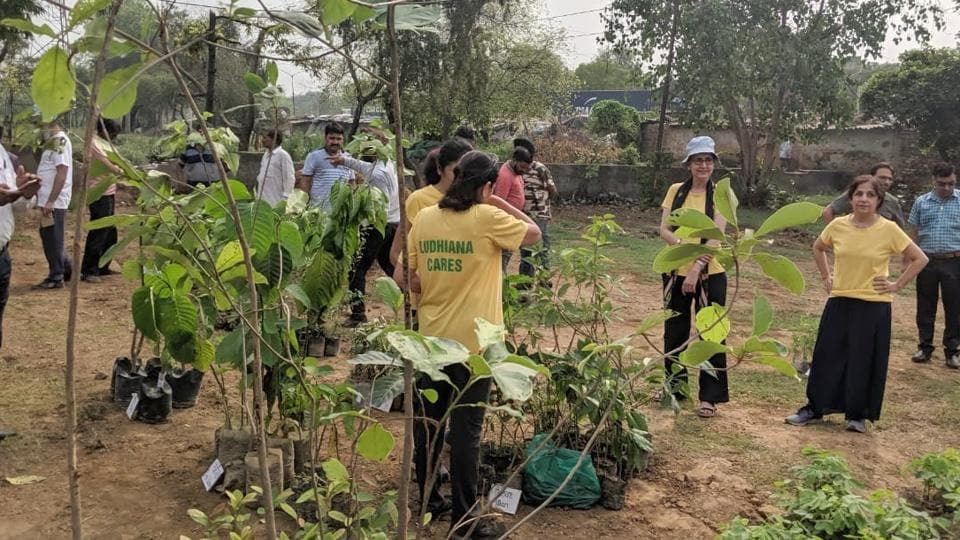 College students participated in tree plantation drives.