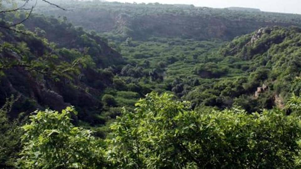 Officials also said that the forest will have all the components of a sustainable ecosystem, such as native plant varieties and water bodies, which will be strategically located in high recharge zones to trap rainwater coming from the Aravallis.