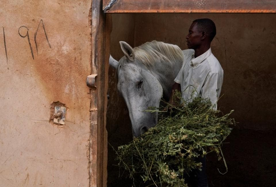 A worker feeds a horse at a private stable at the Equestrian Club, in Khartoum, Sudan. For decades the Equestrian and Racing Club has given upper-crust Sudanese the chance to learn horse riding and watch horse racing in a shady compound set apart from the surrounding urban bustle of the capital Khartoum. But the club has had to cut back activities since popular unrest erupted in December and led to the fall of autocratic President Omar al-Bashir in April, dampening high society life. (Andreea Campeanu / REUTERS)