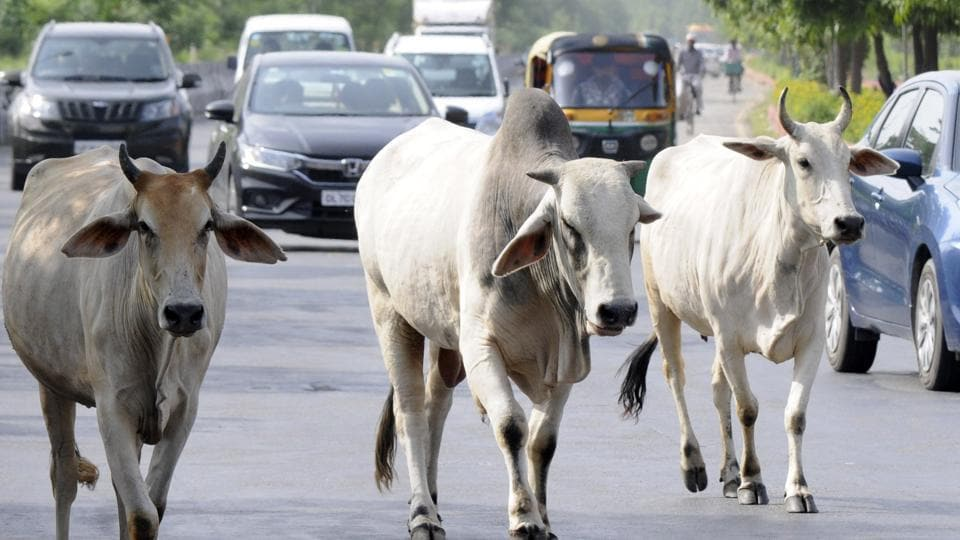 According to Rohit Kumar, an eyewitness, the van was speeding and had jumped a traffic signal before it hit a cow crossing the road. Image used for representational purpose only.