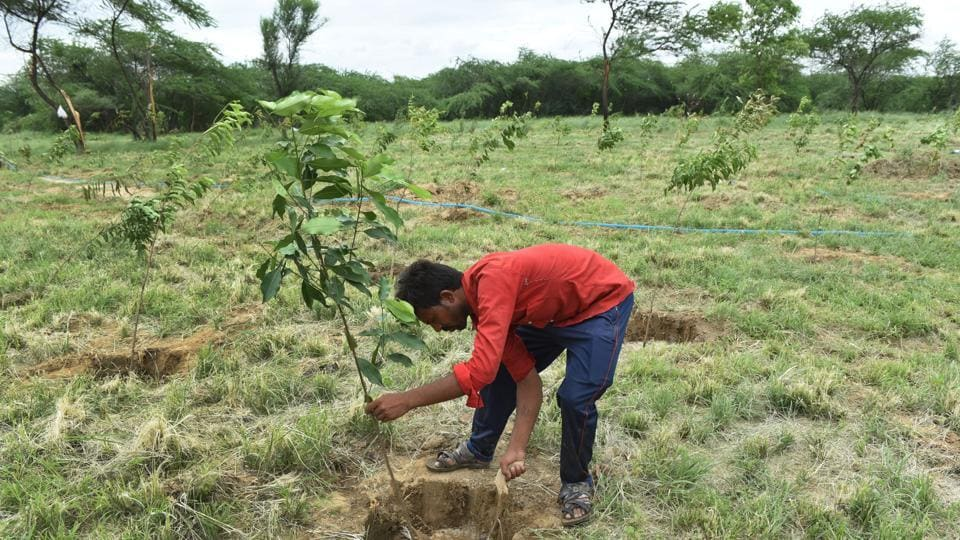 Students planting trees as a part of Mega Plantation drive by the Ministry of Forest and Wildlife, Government of Delhi, at Issapur Forest, in New Delhi.