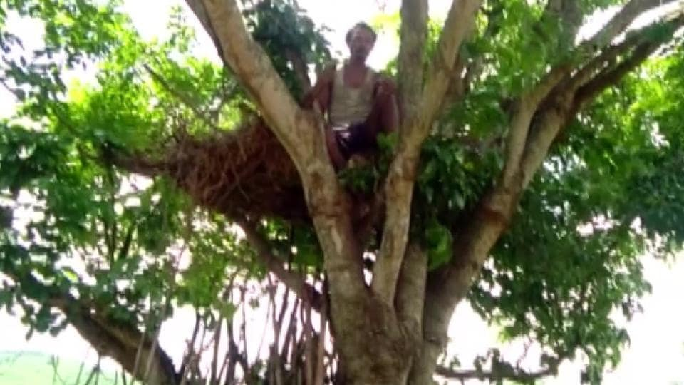 Sudya Mahakud began staying atop the tree after his house was damaged by wild elephants three days ago.