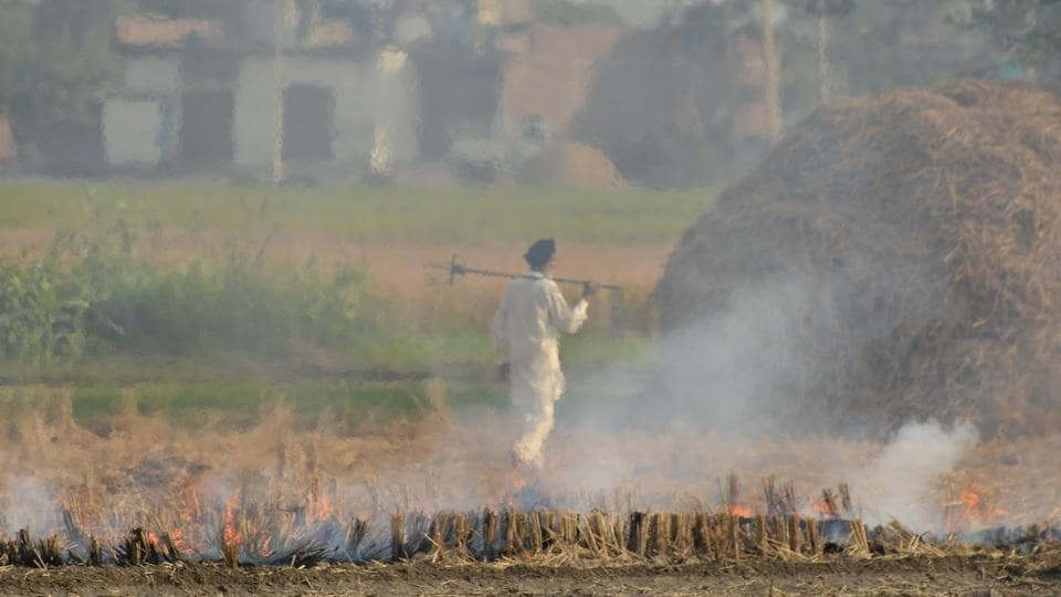 An Indian farmer walks back after burning paddy crop stubble on the outskirts of Amritsar, Punjab.