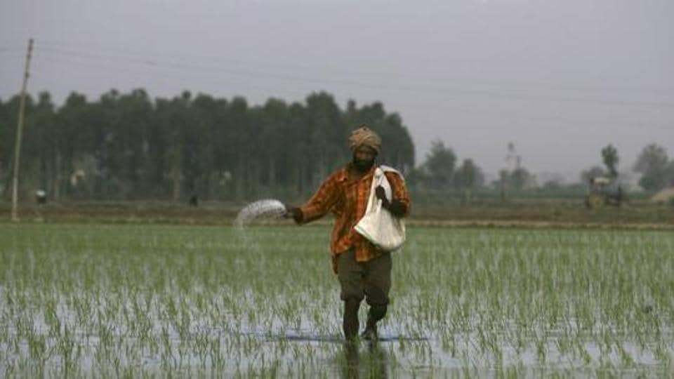 Fertiliser major IFFCO on Thursday reduced the price of its complex fertilisers, including DAP, by Rs 50 per bag as part of efforts to bring down farmers' input cost. (Representative Image)