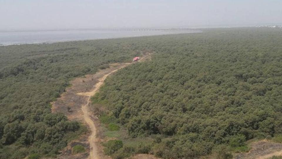 The project is passing through mangroves and their 50m buffer zone area close to the Karanja creek.