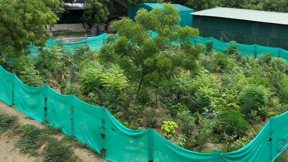 These urban forests will be modelled on the Japanese Miyawaki system of plantation.
