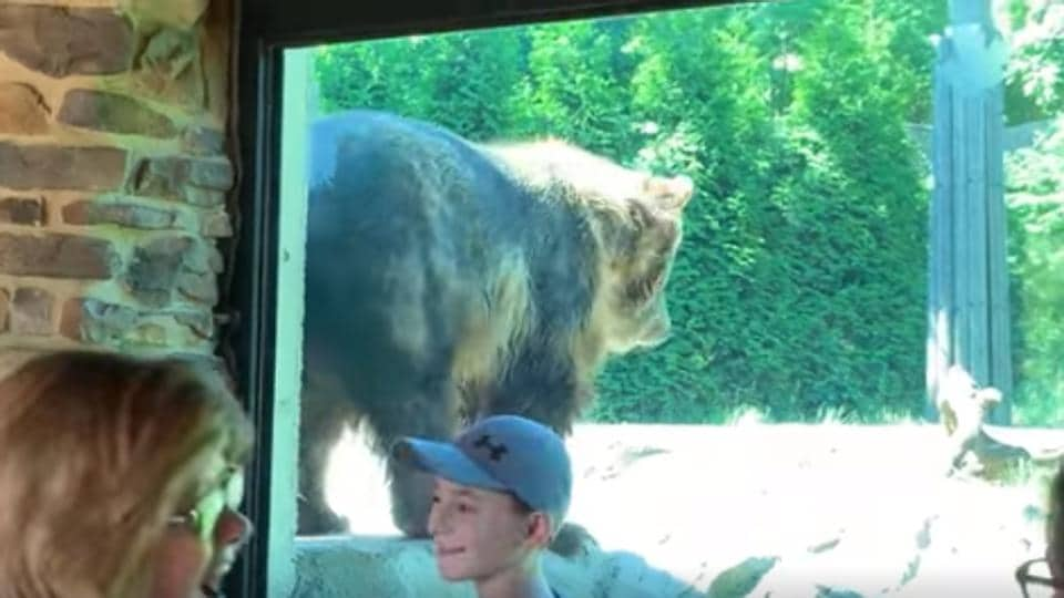 The video of the bear created a stir among people.