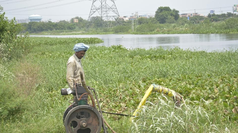 Thousands of farmers, including Mohar Singh (above) are forced to depend upon the polluted Hindon to irrigate their fields.