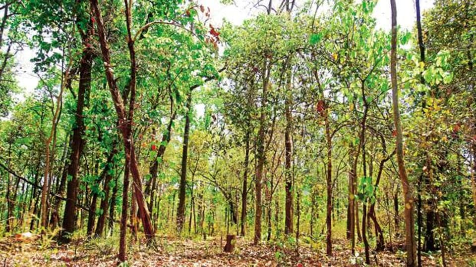 The Wildlife Conservation Strategy of 2002 recommends a buffer of 10 km around sanctuaries. The SC had upheld the policy and directed states and the Centre on several occasions to enforce the ESZ.