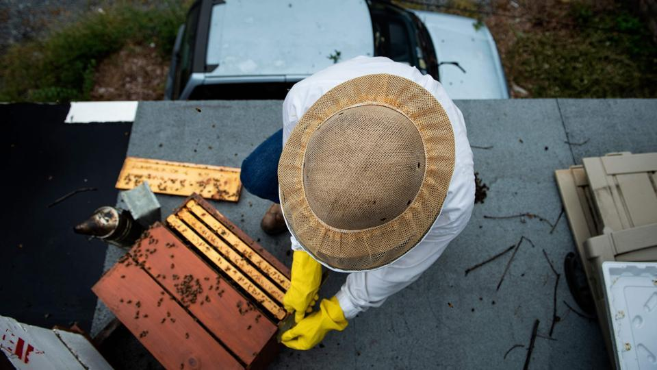 Urban beekeeper Del Voss opens his apiary while looking at beehives above his garage in Washington, DC. The Swarm Squad, Washington's best, last and only line of defense against a rise in swarms blamed in part on urban beekeeping. With populations in decline across the planet, environmentalists are especially worried about the fate of the honeybee, an insect that pollinates 70 out of the top 100 human food crops. (Brendan Smialowski / AFP)