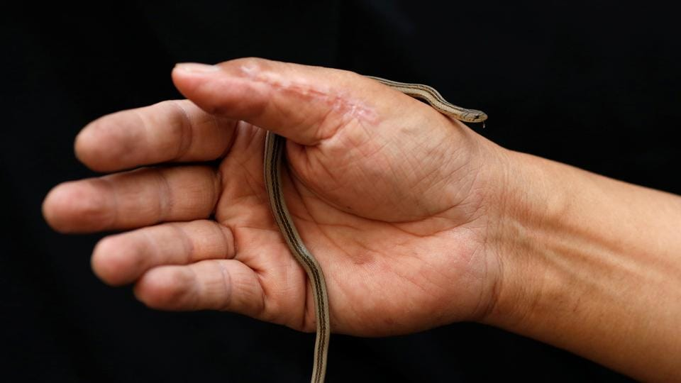 Firefighter Pinyo Pukpinyo, known as 'snake wrangler', shows a Kukri snake which he caught, at a fire station in Bangkok. Many homes in the Thai capital are visited by snakes, which live in underground canals and enter gardens or toilets during the rainy season in search of food. Bangkok firefighters spend more time catching snakes than putting out fires, with more than 100 snake encroachments a day in recent months, compared to just one or two fires. (Soe Zeya Tun / REUTERS)